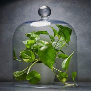 Quelle est la meilleure plante pour purifier l'air de votre maison ?