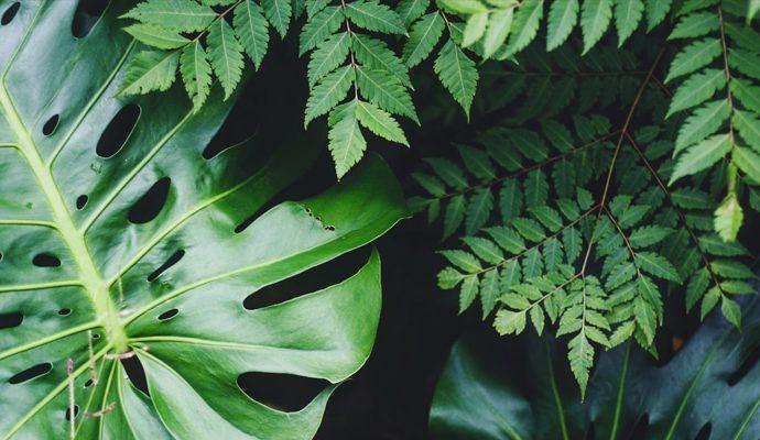 Assainir l'air de la maison à l'aide de plantes dépolluantes